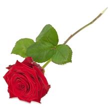 Rød rose fra Aarstidens Blomster