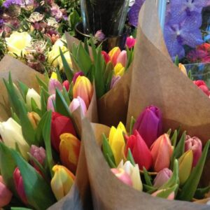 Tulipaner mix
