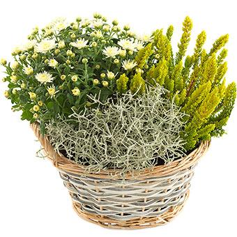 Efterår hvid, gylden og grøn